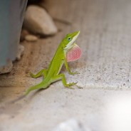 Houston Portrait and Wedding Photographer – Here Lizard Lizard