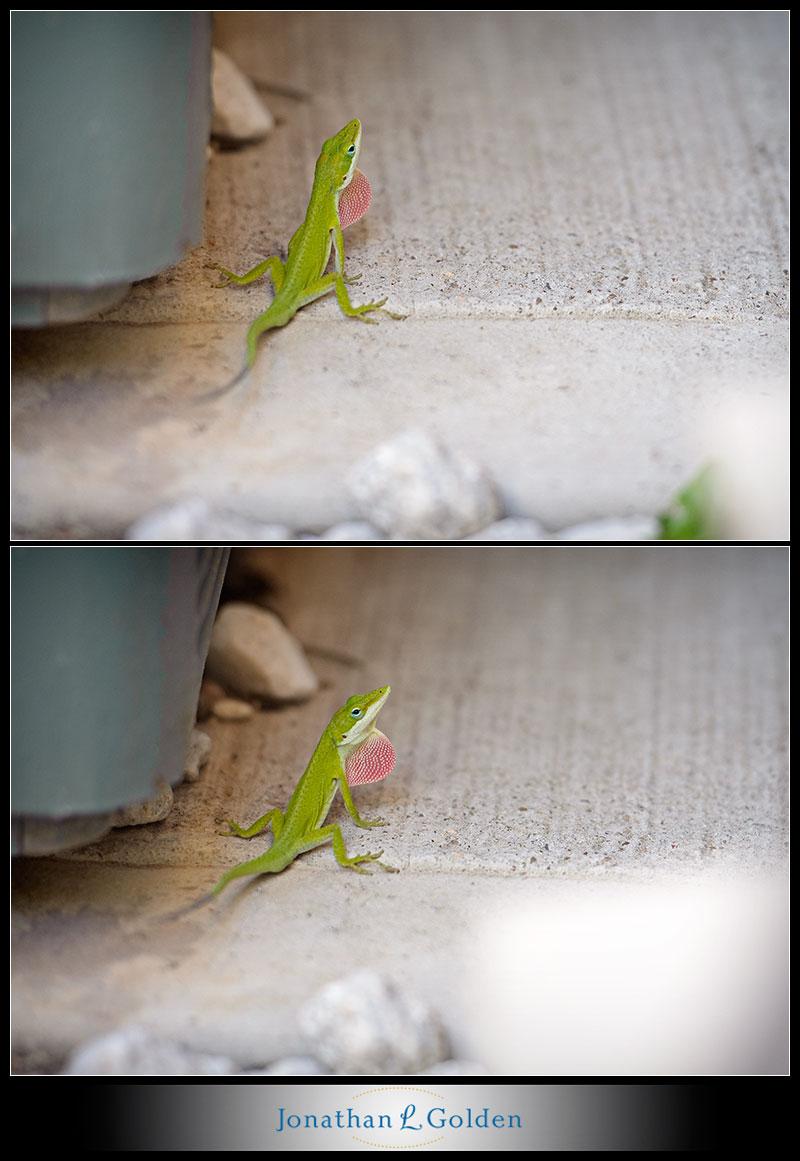 houston-portrait-wedding-photographer-lizard-photo